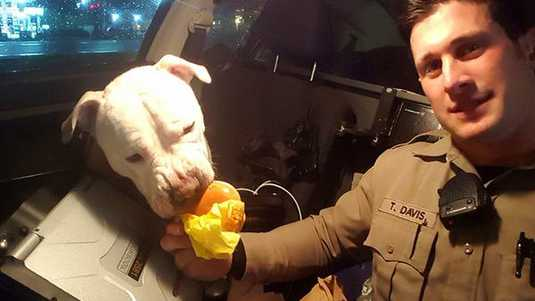 Hulpsheriff Davis met pitbull 'Cheeseburger'